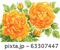 rose20315pix7 63307447