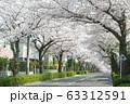 東玉川学園桜並木1 63312591