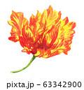 turip20316pix7 63342900