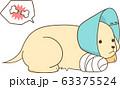 ゴールデンレトリバーの子犬(骨折してエリザベスカラーをつける) 63375524
