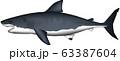 ホオジロザメ 63387604