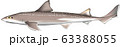 ホシザメ 63388055