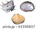 魚介・サザエ、ホタテ、アワビ 63399837