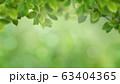 背景-ナチュラル-葉-グリーン-春-初夏-夏 63404365