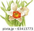 narcissus20318pix7 63413773