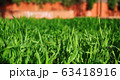 background with green grass 63418916