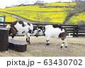 春のマザー牧場 花の大斜面とヤギ 63430702