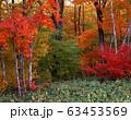 秋の森 63453569