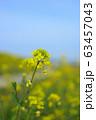 菜の花 63457043