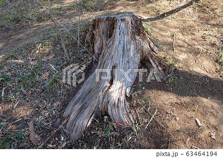 木の切り株 63464194