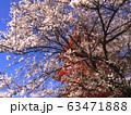 sakura and pagoda temple, Japan 63471888
