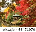 Autumn Leaves, Hibiya Park Tokyo 63471970