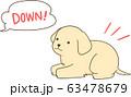 ゴールデンレトリバーの子犬(伏せ) 63478679