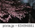 Spring Sakura cherry blossoms 63494881