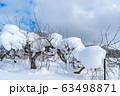 真冬のりんご園 63498871
