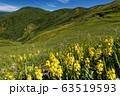 巻機山・割引岳稜線のキンコウカの花と牛ヶ岳 63519593
