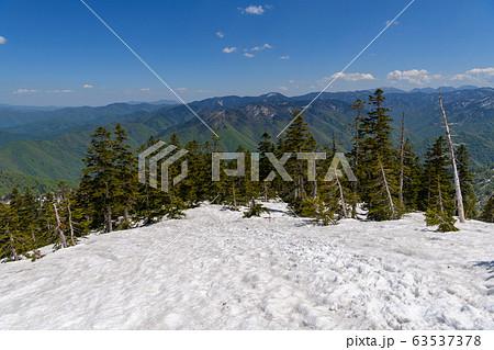 春の会津駒ヶ岳のオオシラビソの森 63537378