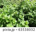 小さい小さい野の花フラサバソウ 63538032