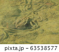 卵を守るアズマヒキガエル 63538577