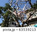 白い綺麗な花は梅の花 63539213