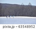 助走を始めるタンチョウ(北海道・鶴居) 63548952