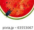 夏:虫 西瓜 スイカ割り 自然 真夏 夏休み 思い出 果物 水彩 手描き フルーツ 種 果汁 63553067