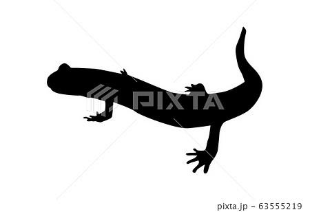 動物シルエット両生・ハ虫類サンショウウオ3 63555219