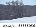 給餌場に飛来する丹頂鶴(北海道・鶴居) 63555956