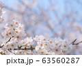 桜 63560287