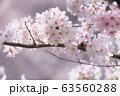 桜 63560288