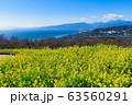 吾妻山公園から見た相模湾と満開の菜の花 63560291