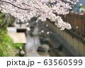 二ヶ領用水の桜 63560599