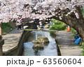 二ヶ領用水の桜 63560604