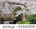 二ヶ領用水の桜 63560606