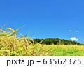 青空の田んぼ 実りの稲 63562375