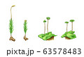 이끼의 종류 세밀화 63578483
