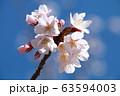 花開く 63594003
