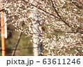 ジョウビタキ メス  63611246
