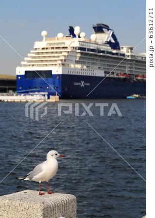 鳥 63612711