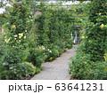 初夏の薔薇咲くガーデン 63641231