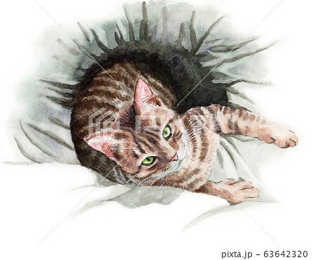 水彩で描いた布団の上で見上げる猫 63642320