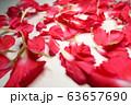 赤いカーネーションの花びら 63657690