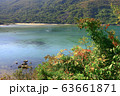 30 Nov 2008 Hoi Ha Wan, bushes all over the 63661871