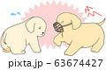 ゴールデンレトリバーの子犬(口輪をした子犬が他の子犬に襲い掛かる) 63674427