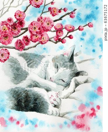水彩で描いた梅の花と眠る猫 63675172