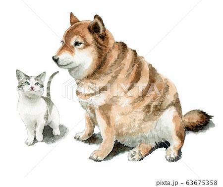 水彩で描いた雑種の老犬と子猫 63675358