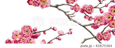 ブログ用ヘッダ画像ピンク梅 63675364