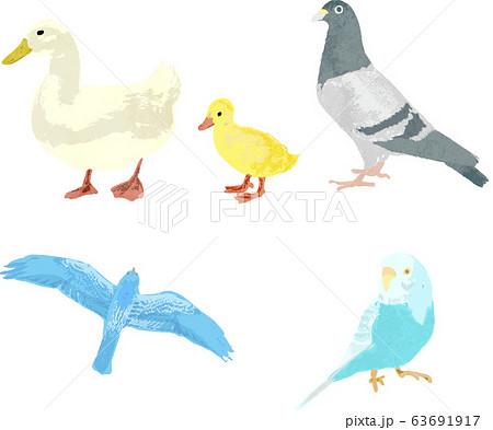 鳥のベクター素材 63691917