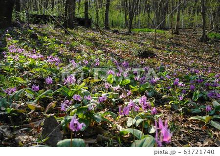 3月 佐野14カタクリの群落自生地・万葉自然公園かたくりの里 63721740