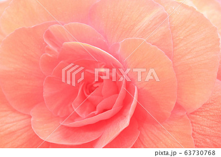 赤い園 大輪のアート 63730768